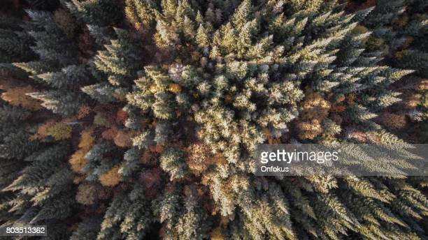 Aerial View of Autumn Forest Nature, Quebec, Canada