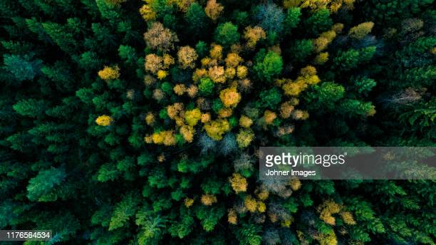 aerial view of autumn forest - computergrafieken stockfoto's en -beelden