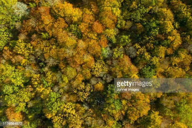 aerial view of autumn forest - laubbaum stock-fotos und bilder