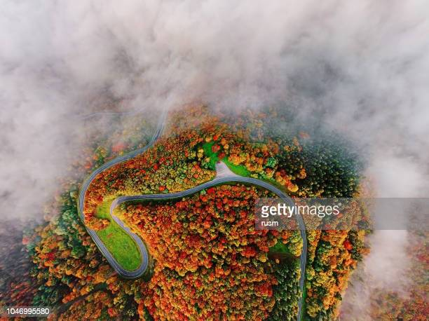 aerial view of autumn forest road in morning fog. mosele valley, germany. - moselle stock pictures, royalty-free photos & images