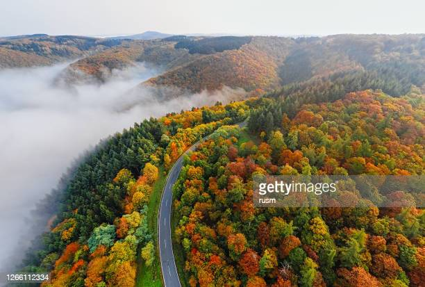 aerial view of autumn forest road in morning fog. mosele valley, germany. - germany stock pictures, royalty-free photos & images