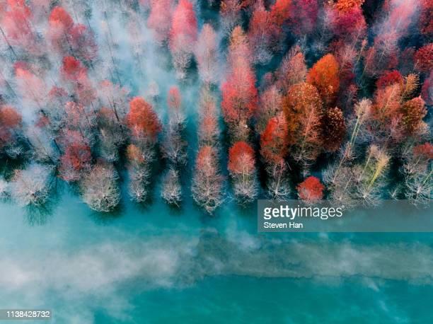aerial view of autumn leaves in shanghai - ええじゃないか 発祥の地 ストックフォトと画像