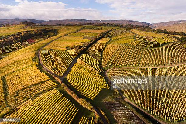 Aerial view of autumnal vineyards