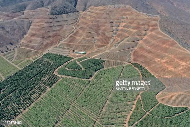 Aerial view of avocado plantations in La Ligua Petorca province Valparaiso Region Chile on September 12 2019 The rivers of Petorca and Ligua have...