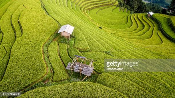 aerial view of beautiful curve line of green rice terrace and the mountain landscape view at mu cang chai, vietnam - impossiable stock pictures, royalty-free photos & images