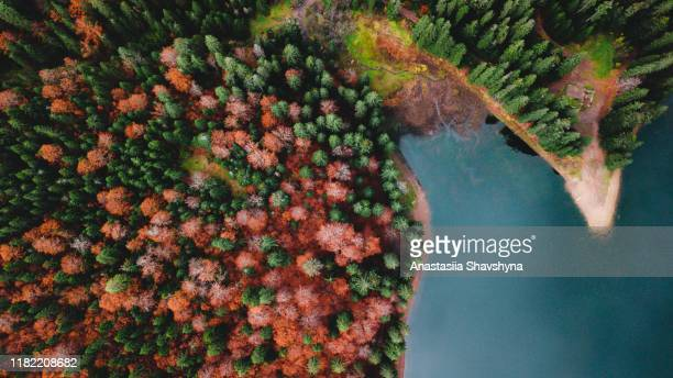 aerial view of beautiful mountain lake and colorful forest during autumn season - ukraine landscape stock pictures, royalty-free photos & images