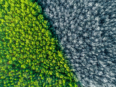 Aerial view of bi-color forest - gettyimageskorea