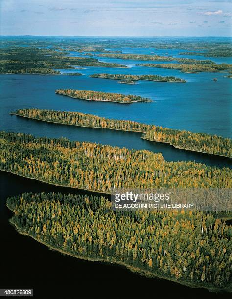 Aerial view of birch and pine forests Finland