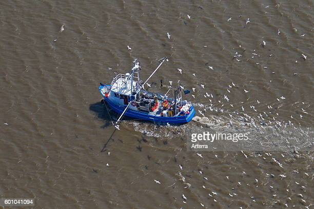Aerial view of blue shrimp trawler boat fishing for shrimps at sea followed by seagulls