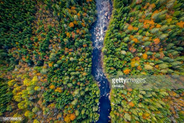 aerial view of boreal forest nature and river in autumn season, quebec, canada - quebec stock pictures, royalty-free photos & images