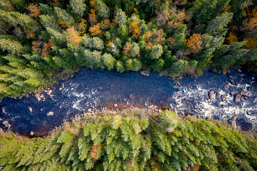 Aerial View of Boreal Forest Nature in Autumn Season, Quebec, Canada 1051502202