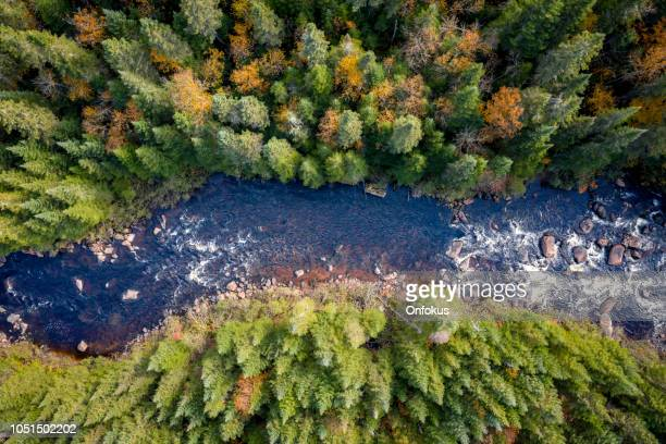 aerial view of boreal forest nature in autumn season, quebec, canada - overhead view stock pictures, royalty-free photos & images