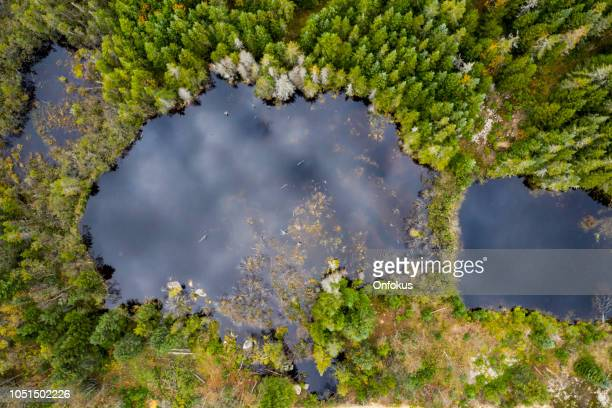 aerial view of boreal forest nature in autumn season, quebec, canada - beaver dam stock pictures, royalty-free photos & images