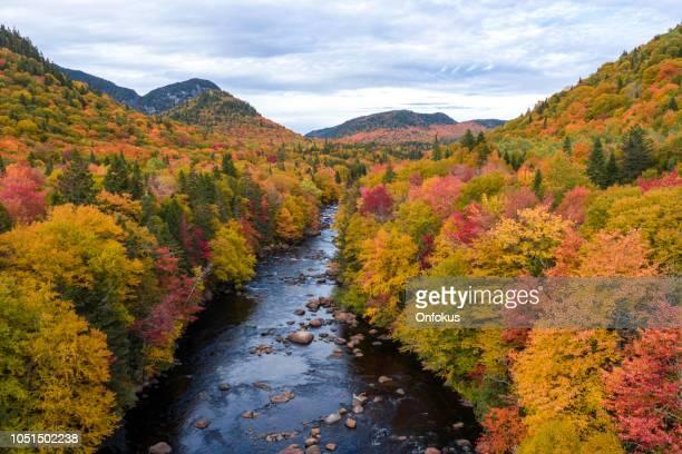 秋の紅葉シーズン、ケベック、カナダの寒帯の森林自然の空撮