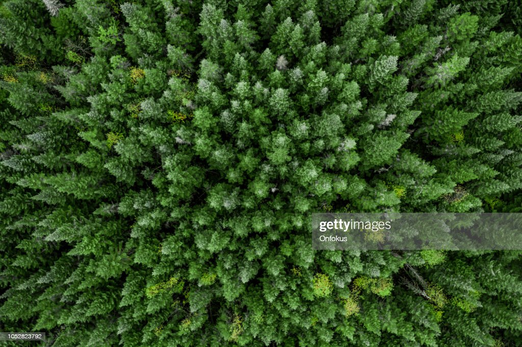 Aerial View of Boreal Forest Nature in Autumn Season, Quebec, Canada : Stock Photo
