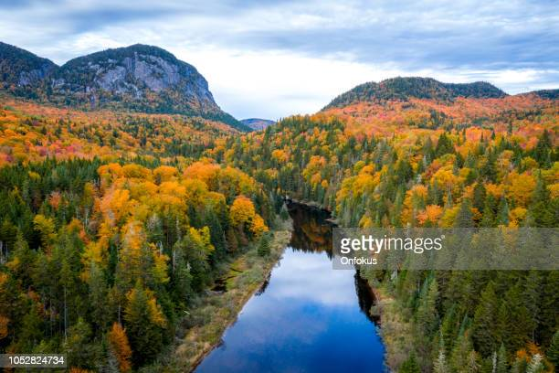 aerial view of boreal forest nature in autumn season, quebec, canada - quebec stock pictures, royalty-free photos & images