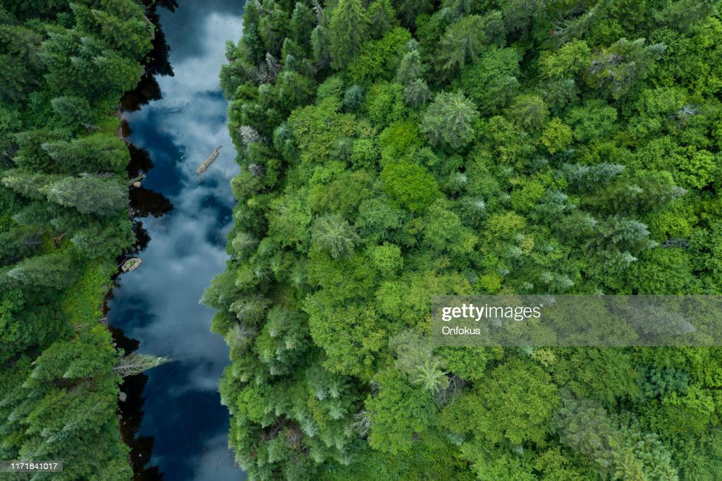 Aerial View of Boreal Nature Forest and River in Summer : Stock Photo