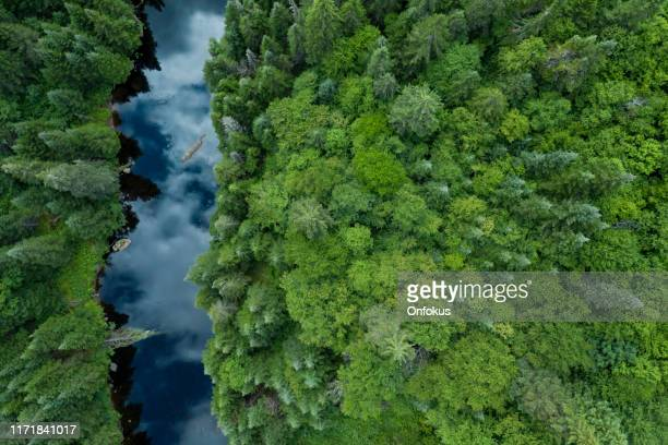 aerial view of boreal nature forest and river in summer - overhead view stock pictures, royalty-free photos & images