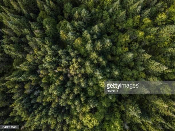 夏の自然林の空撮