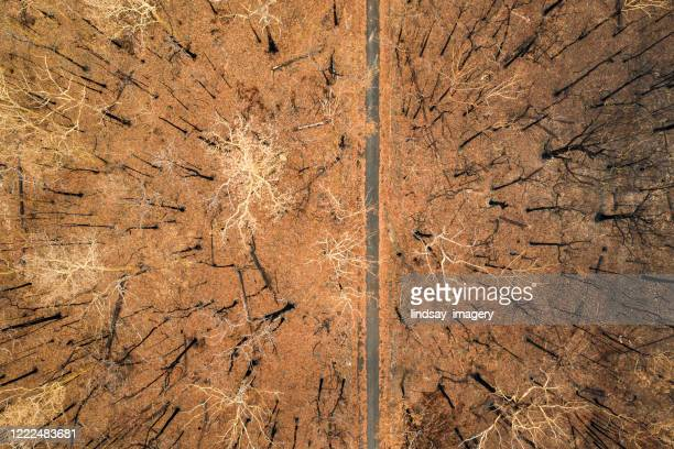 aerial view of burnt out destroyed forest with road - australia fire stock pictures, royalty-free photos & images