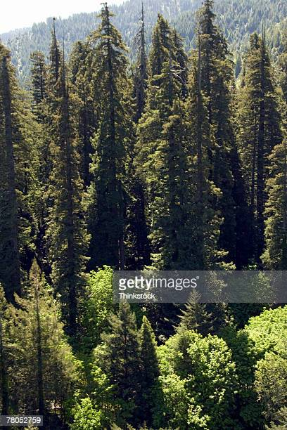 aerial view of california woods - humboldt redwoods state park stock photos and pictures