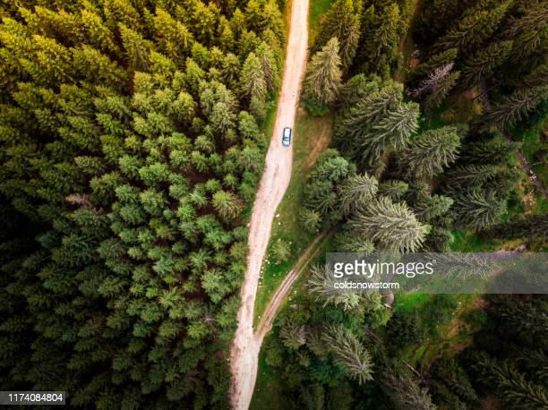 aerial view of car on winding forest road in wilderness - romania stock pictures, royalty-free photos & images