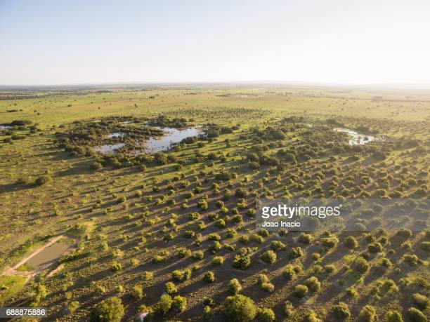 aerial view of cerrado landscape at sunset - goias, brazil - goias stock pictures, royalty-free photos & images