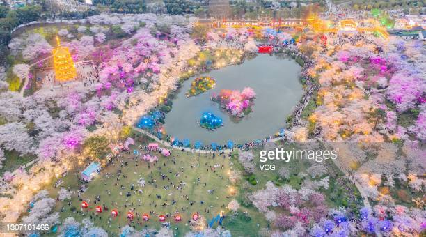 Aerial view of cherry blossoms at Wuhan East Lake Cherry Blossom Park on March 14, 2021 in Wuhan, Hubei Province of China.