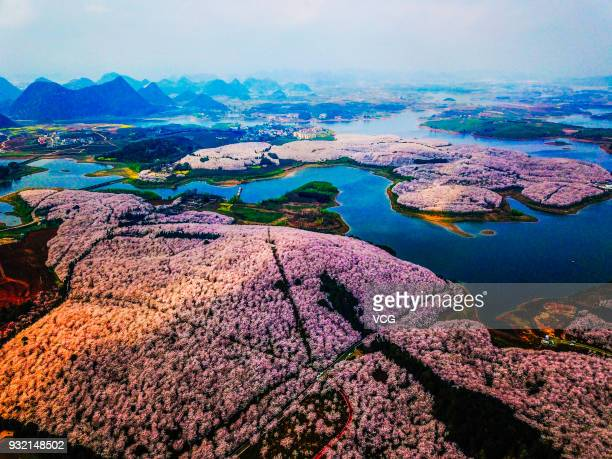 Aerial view of cherry trees in bloom at Pingba Farm on March 13, 2018 in Guiyang, Guizhou Province of China. Pingba Farm boasts of over five hundred...