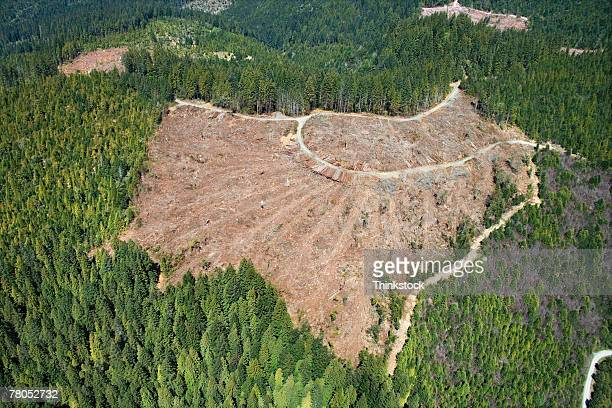 aerial view of clear-cut forest - deforestation stock pictures, royalty-free photos & images