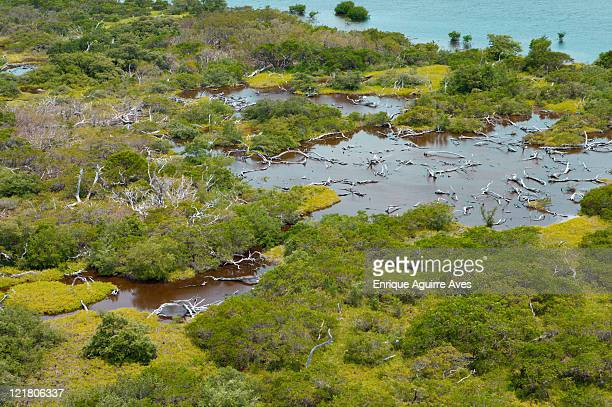 aerial view of coastal mangrove damaged by storm, belize, central america - destruction stock pictures, royalty-free photos & images
