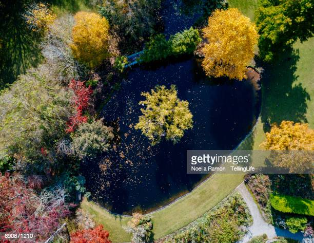 aerial view of colorful autumn trees and a lake - dandenong stock photos and pictures