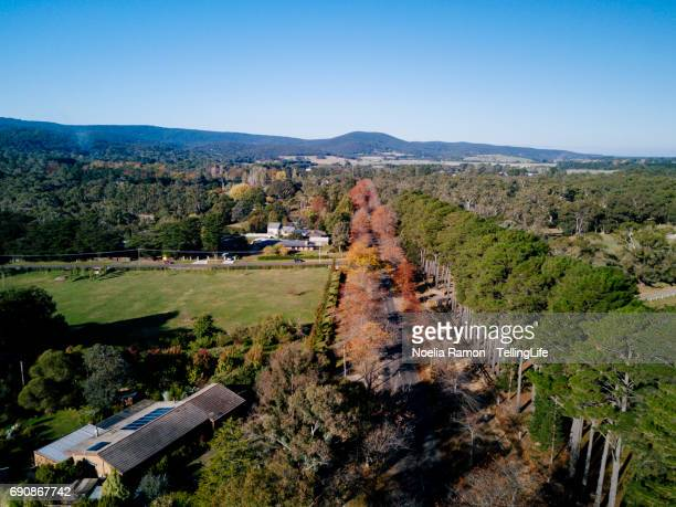 aerial view of colorful autumn trees and a road - dandenong stock photos and pictures