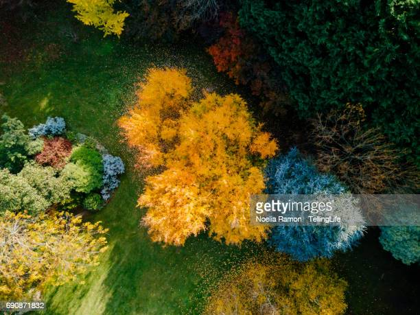 Aerial view of colorful Autumn trees