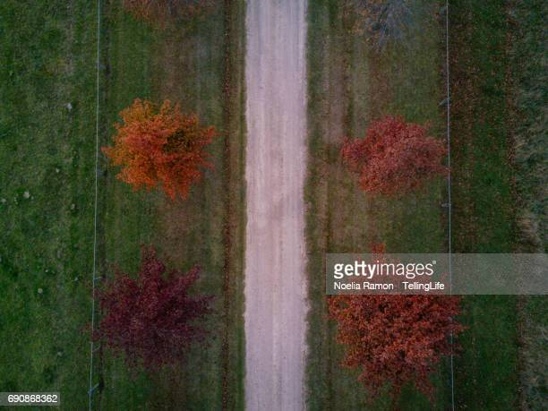 Aerial view of colorful Autumn trees with a footpath