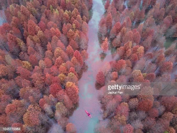 aerial view of colourful metasequoia - feuchtgebiet stock-fotos und bilder
