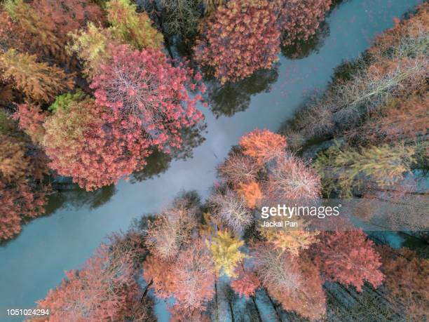 aerial view of colourful metasequoia - four seasons stock pictures, royalty-free photos & images
