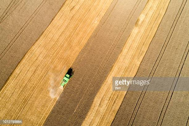 aerial view of combine harvester harvesting wheat in field - cereal plant stock pictures, royalty-free photos & images