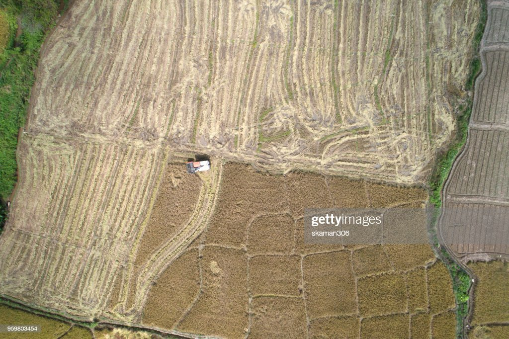 aerial view of Combine harvester in action on wheat field. Harvesting : Stock-Foto
