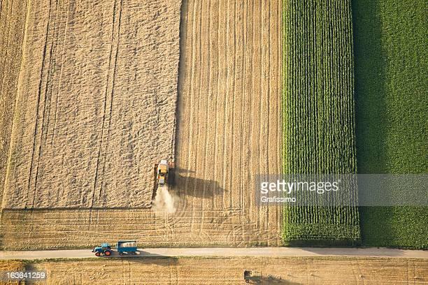 Luftbild von Mähdrescher Arbeiten auf Weizen Feld