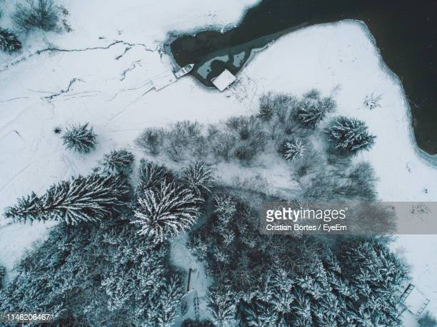 aerial view of coniferous trees on snowy field during winter - bortes stock photos and pictures
