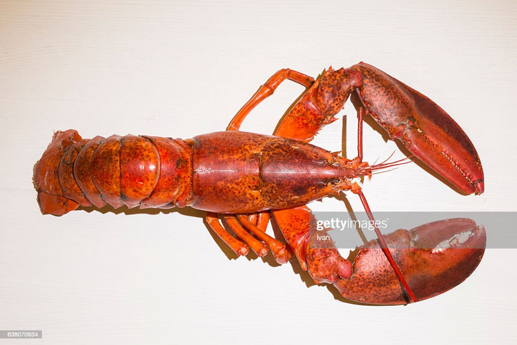 Aerial View of Cooked Lobster : ストックフォト