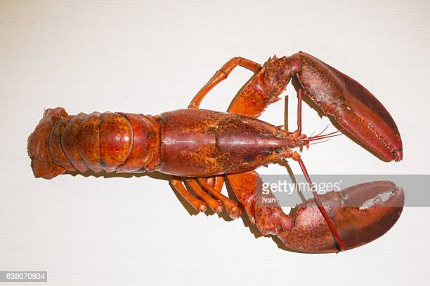 Aerial View of Cooked Lobster