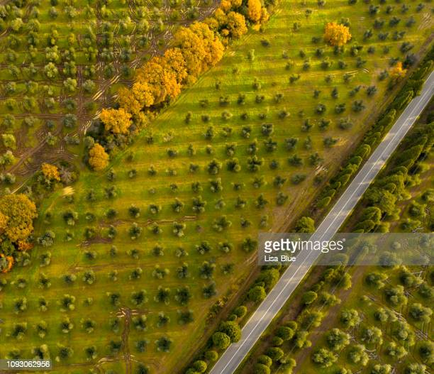 aerial view of country road through cypress and olive trees,  chianti region, tuscany, italy - extra virgin olive oil stock pictures, royalty-free photos & images