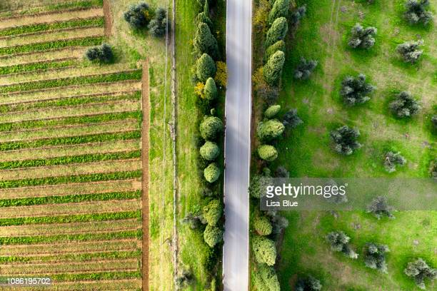 aerial view of country road through cypress trees, olive trees and cultivated land. chianti region, tuscany, italy - attività agricola foto e immagini stock