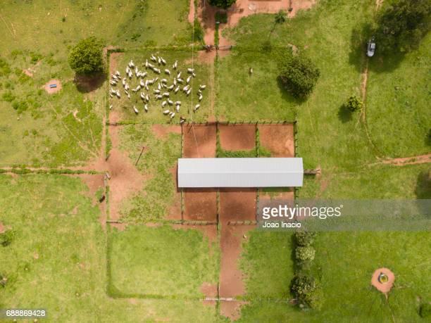 Aerial view of cowboys herding cattle - Goias, Brazil