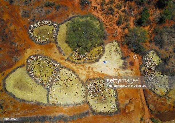 Aerial view of cows suffering from the drought grouped in fences to be fed by the governement Oromia Yabelo Ethiopia on March 5 2017 in Yabelo...