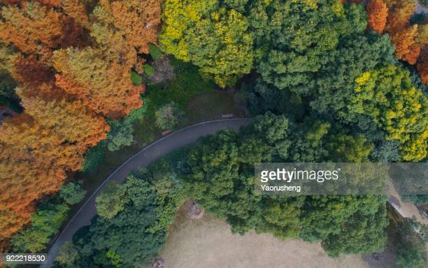 aerial view of curve road in the forest,yellow and green trees