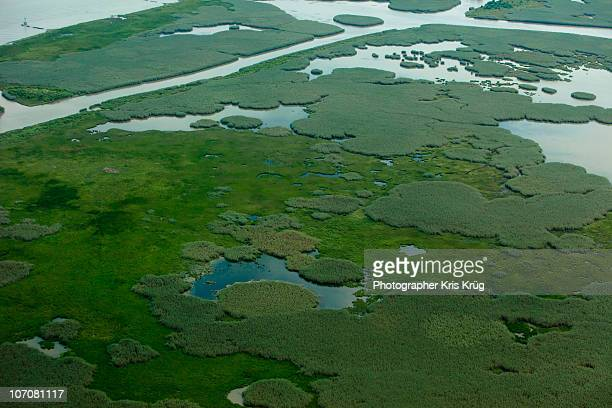 Aerial View of Dark Green Marshlands in Louisiana