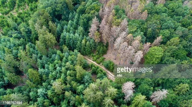 luftaufnahme von abgestorbenen bäumen - waldsterben - waldsterben - tod stock-fotos und bilder